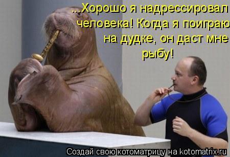 Котоматрица: ...Хорошо я надрессировал  человека! Когда я поиграю на дудке, он даст мне  рыбу!