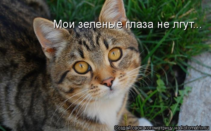 Котоматрица: Мои зеленые глаза не лгут...