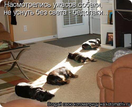 Котоматрица: Насмотрелись ужасов собаки, не уснуть без света - бедолаги...