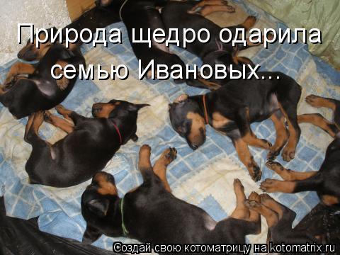 Котоматрица: Природа щедро одарила семью Ивановых...
