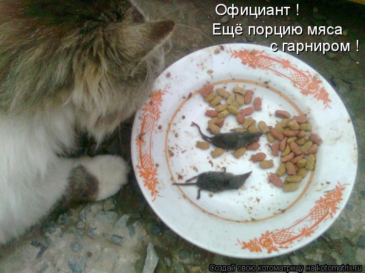 Котоматрица: Официант ! Ещё порцию мяса  с гарниром !