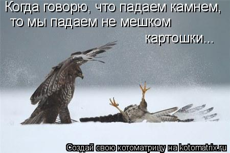 Котоматрица: Когда говорю, что падаем камнем, то мы падаем не мешком  картошки...