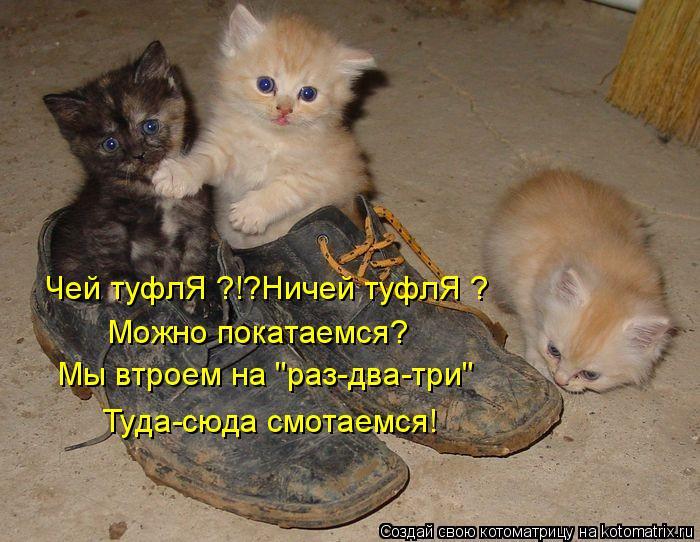 """Котоматрица: Чей туфлЯ ?!?Ничей туфлЯ ? Можно покатаемся? Мы втроем на """"раз-два-три"""" Туда-сюда смотаемся!"""