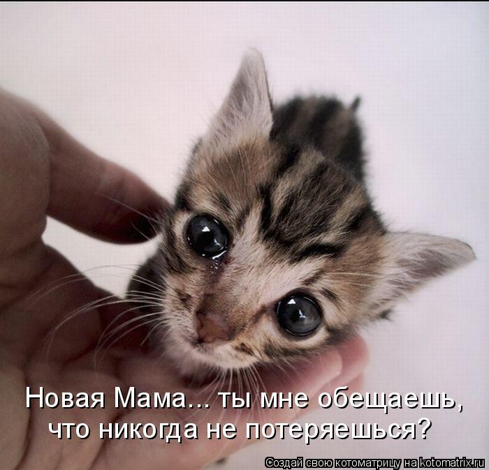 Котоматрица: Новая Мама... ты мне обещаешь,  что никогда не потеряешься?