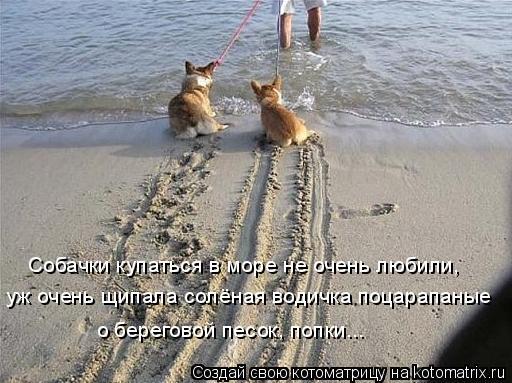 Котоматрица: Собачки купаться в море не очень любили, уж очень щипала солёная водичка поцарапаные о береговой песок, попки...