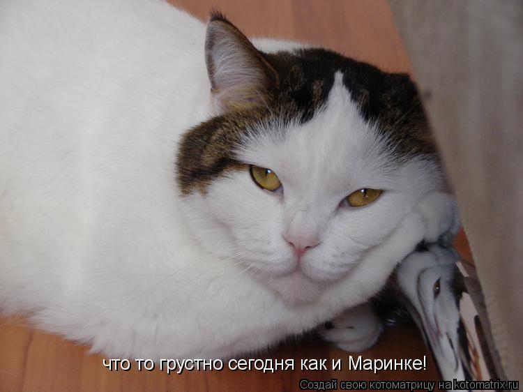Котоматрица: что то грустно сегодня как и Маринке!