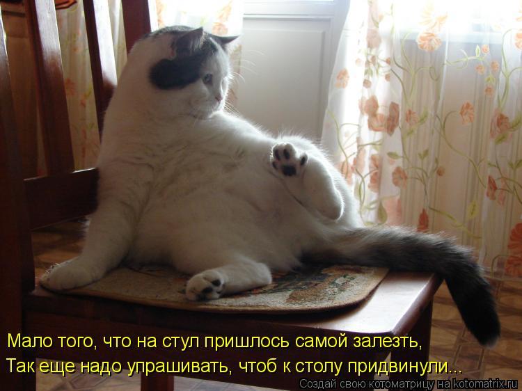 Котоматрица - Мало того, что на стул пришлось самой залезть, Так еще надо упрашивать