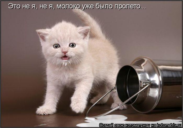 Котоматрица: Это не я, не я, молоко уже было пролето...