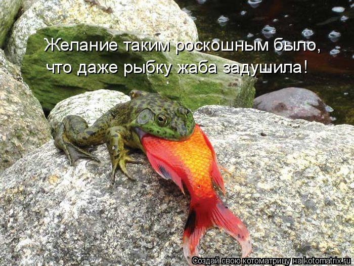 Котоматрица: Желание таким роскошным было, что даже рыбку жаба задушила!