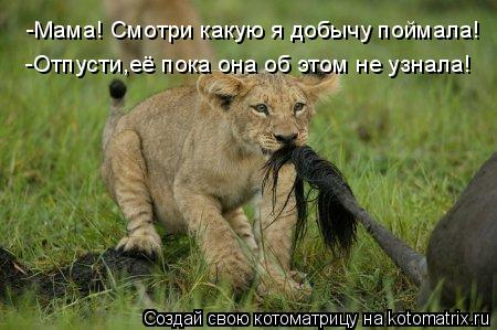 Котоматриця!)))) - Страница 7 935382