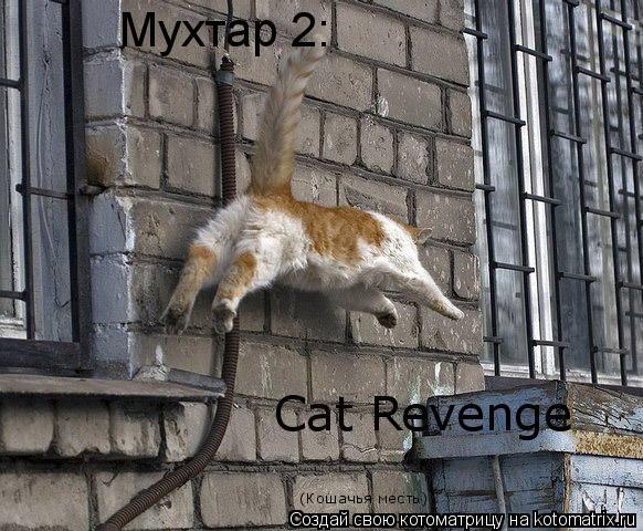 Котоматрица: Мухтар 2: Cat Revenge (Кошачья месть)
