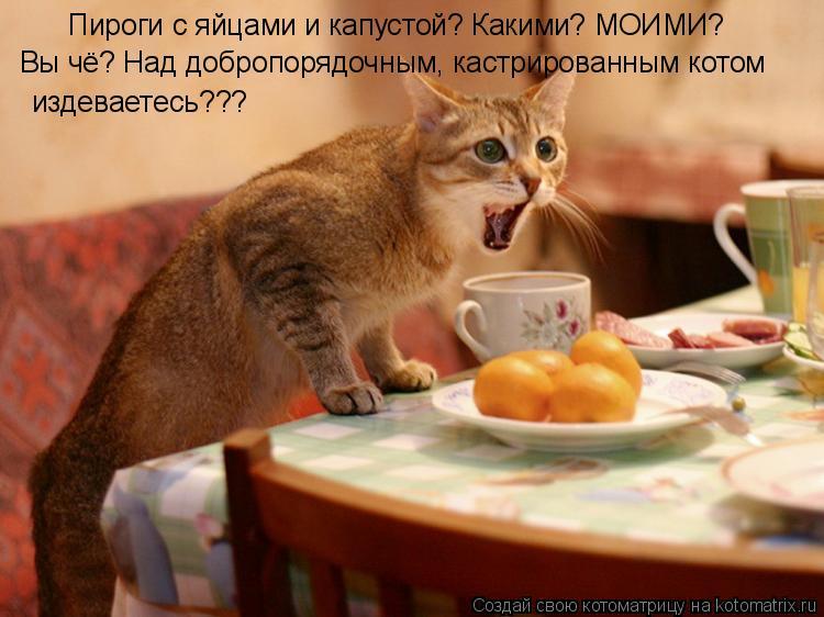 Котоматрица: Пироги с яйцами и капустой? Какими? МОИМИ? Вы чё? Над добропорядочным, кастрированным котом  издеваетесь???