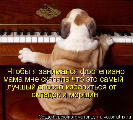 Котоматрица: Чтобы я занимался фортепиано мама мне сказала что это самый  лучшый способ избавиться от складок и морщин.