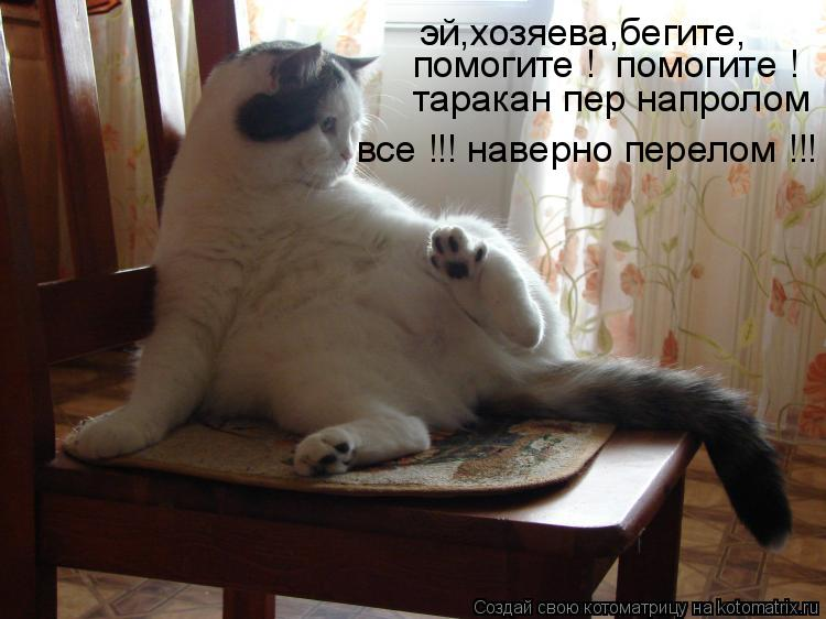 Котоматрица - эй,хозяева,бегите, помогите !  помогите ! таракан пер напролом все !!!