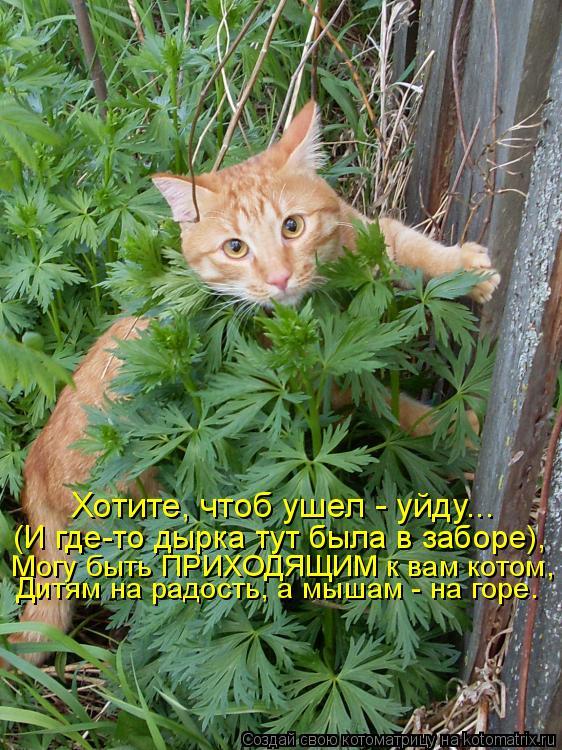 Котоматрица: Хотите, чтоб ушел - уйду... (И где-то дырка тут была в заборе), Могу быть ПРИХОДЯЩИМ к вам котом, Дитям на радость, а мышам - на горе.