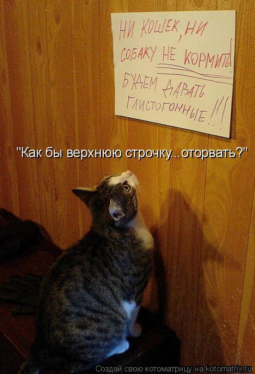 Котоматриця!)))) - Страница 6 935768