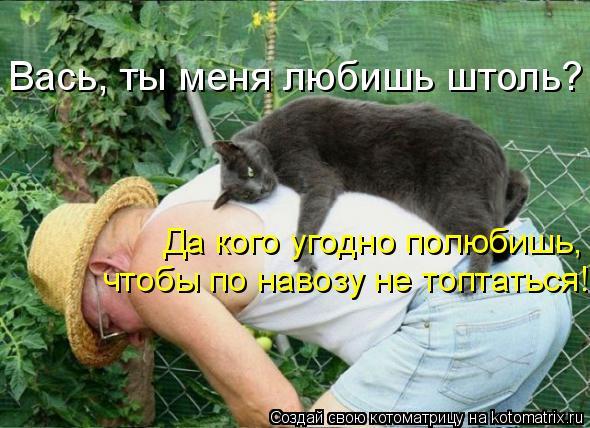 Котоматрица - Вась, ты меня любишь штоль? Да кого угодно полюбишь, чтобы по навозу н