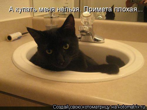 Котоматрица - А купать меня нельзя. Примета плохая...