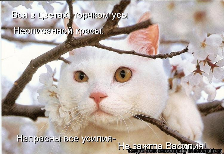 Вся в цветах, торчком усы Неописанной красы. Напрасны все усилия- Не зажгла Василия!
