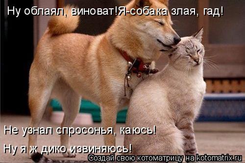 Котоматрица - Ну облаял, виноват!Я-собака злая, гад! Не узнал спросонья, каюсь! Ну я