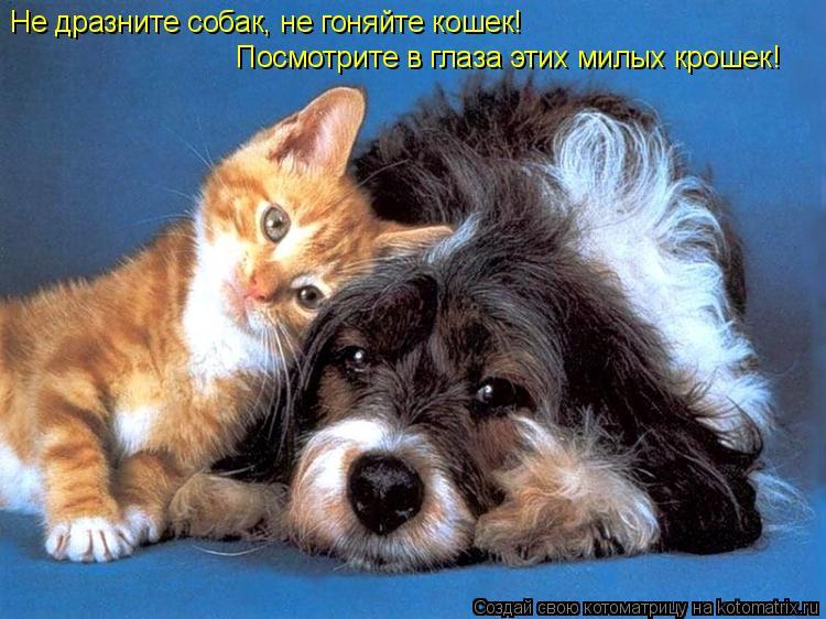 Котоматрица: Не дразните собак, не гоняйте кошек! Посмотрите в глаза этих милых крошек!