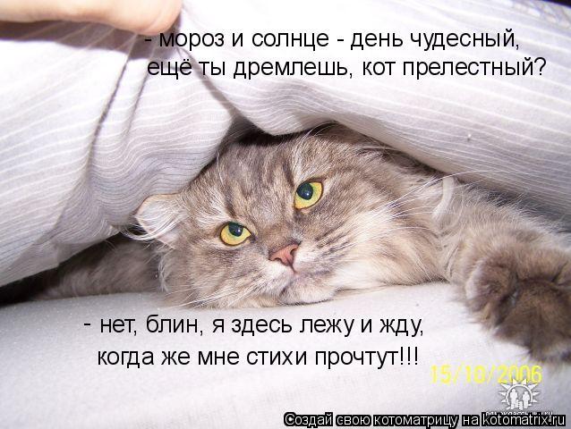 Котоматрица: нет, блин, я здесь лежу и жду,  - мороз и солнце - день чудесный,  ещё ты дремлешь, кот прелестный? когда же мне стихи прочтут!!! -