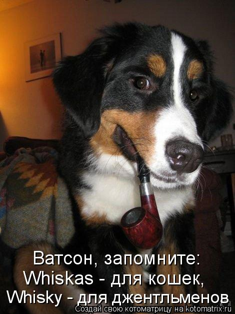 Котоматрица - Ватсон, запомните: Whiskas - для кошек, Whisky - для джентльменов