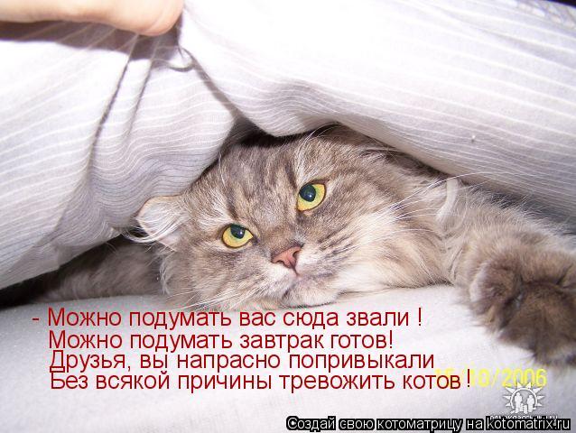 Котоматрица: - Можно подумать вас сюда звали ! Можно подумать завтрак готов! Друзья, вы напрасно попривыкали Без всякой причины тревожить котов !