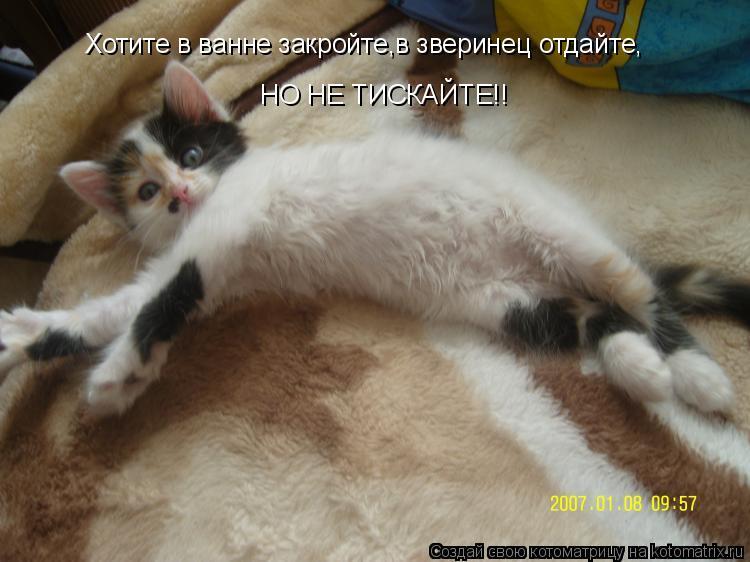 Котоматрица: Хотите в ванне закройте,в зверинец отдайте, НО НЕ ТИСКАЙТЕ!!