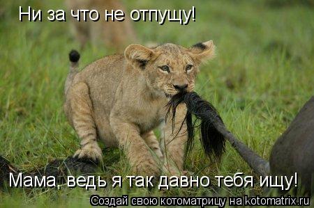 Котоматрица: Ни за что не отпущу! Мама, ведь я так давно тебя ищу!