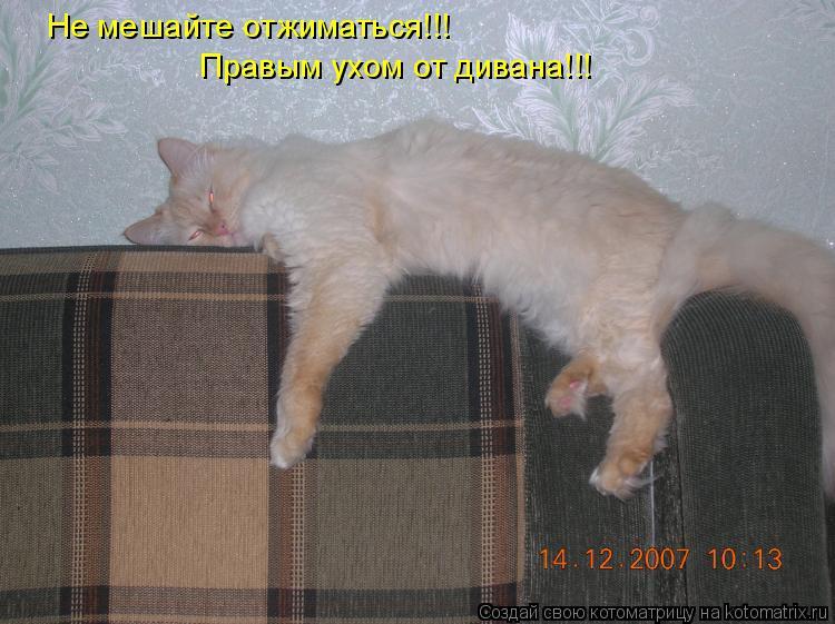Котоматрица: Не мешайте отжиматься!!!  Правым ухом от дивана!!!