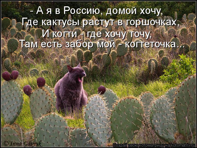 http://kotomatrix.ru/images/lolz/2011/06/23/936910.jpg