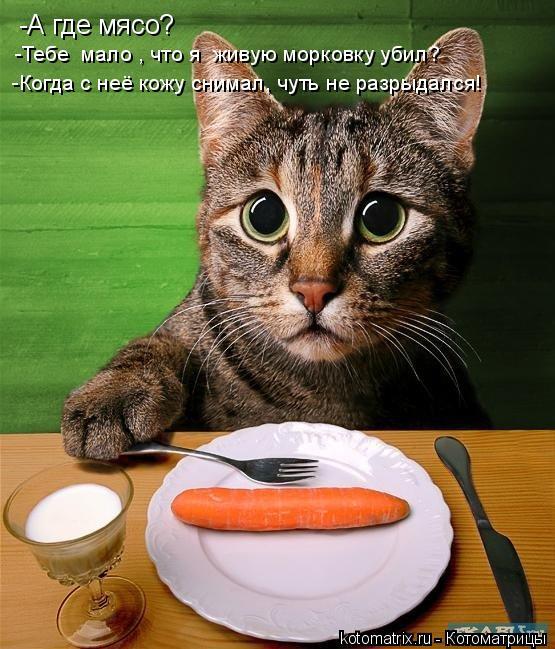 Котоматрица: -А где мясо? -Тебе  мало , что я  живую морковку убил? -Когда с неё кожу снимал, чуть не разрыдался!