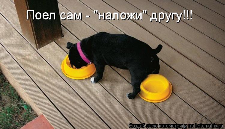 Котоматриця!)))) - Страница 6 937512