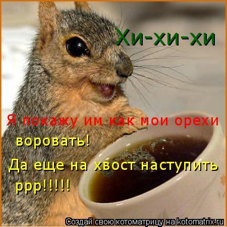 Котоматрица: Хи-хи-хи Я покажу им как мои орехи воровать! Да еще на хвост наступить ррр!!!!!
