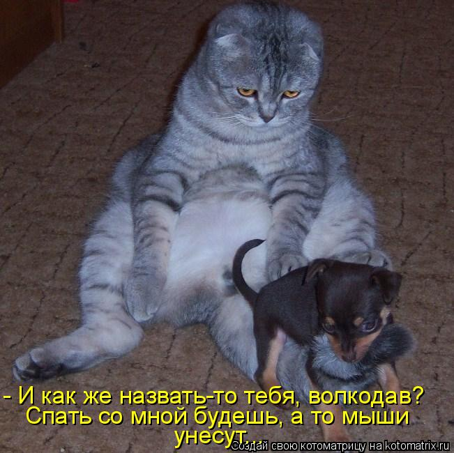 Котоматрица - - И как же назвать-то тебя, волкодав? Спать со мной будешь, а то мыши