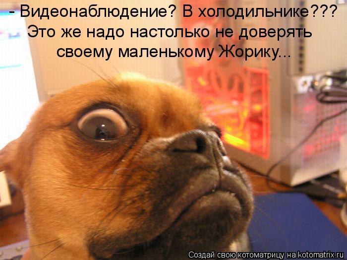 Котоматрица: - Видеонаблюдение? В холодильнике??? Это же надо настолько не доверять своему маленькому Жорику...
