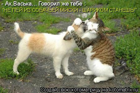 """Котоматрица: - Ах,Васька... Говорил же тебе : """"НЕ ПЕЙ ИЗ СОБАЧЬЕЙ МИСКИ - ШАРИКОМ СТАНЕШЬ!"""""""