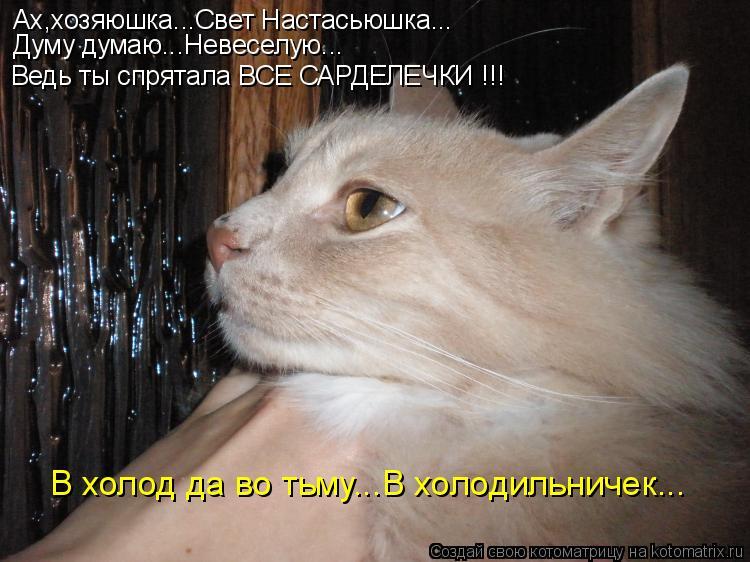 Котоматрица: Ах,хозяюшка...Свет Настасьюшка... Думу думаю...Невеселую... Ведь ты спрятала ВСЕ САРДЕЛЕЧКИ !!! В холод да во тьму...В холодильничек...