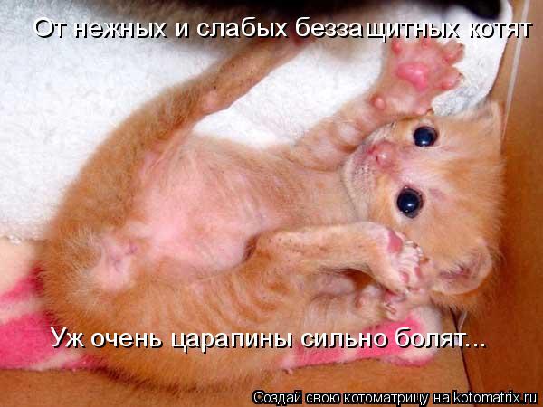 Котоматрица: От нежных и слабых беззащитных котят Уж очень царапины сильно болят...