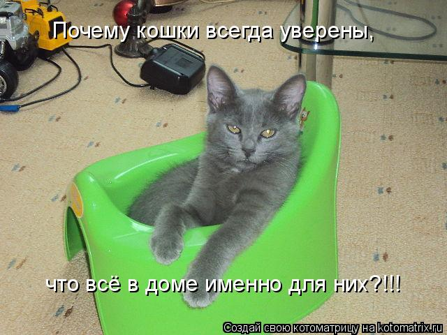 Котоматрица: Почему кошки всегда уверены,  что всё в доме именно для них?!!!