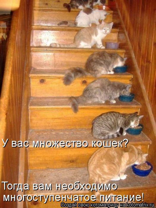 Котоматрица - У вас множество кошек? Тогда вам необходимо многоступенчатое питание!