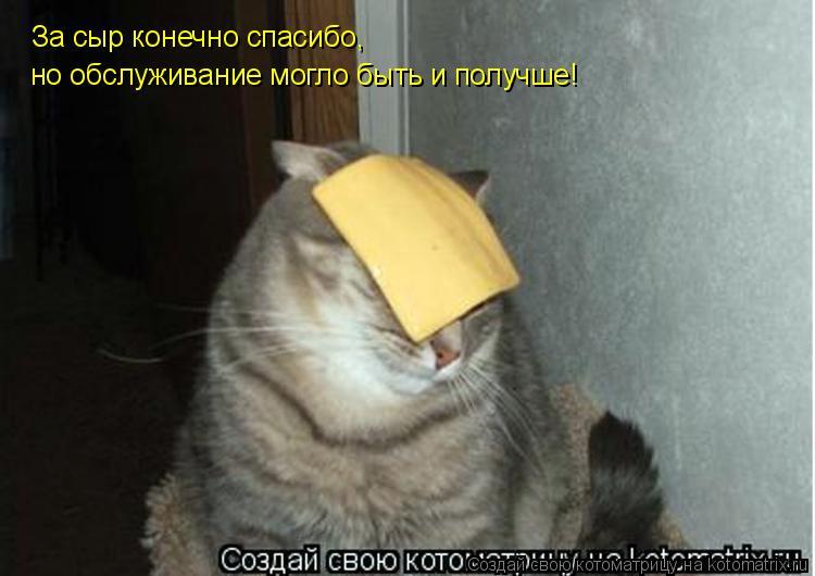 Котоматрица: За сыр конечно спасибо, но обслуживание могло быть и получше!