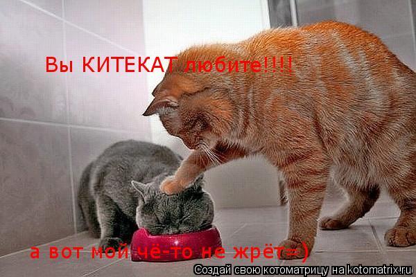 Котоматрица: Вы КИТЕКАТ любите!!!! а вот мой чё-то не жрёт=)
