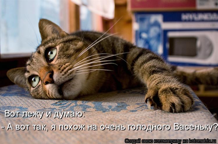 Котоматрица: Пользователь Catmatrix