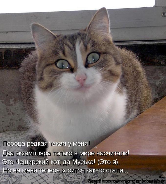 Котоматрица: Два экземпляра только в мире насчитали! Порода редкая такая у меня! Это Чеширский кот, да Муська! (Это я). Но на меня теперь косится как-то ста