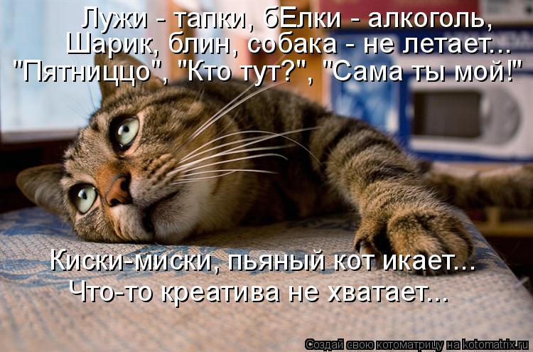 Картинки по запросу кот пьяный