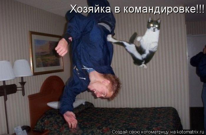 Котоматрица: Хозяйка в командировке!!!
