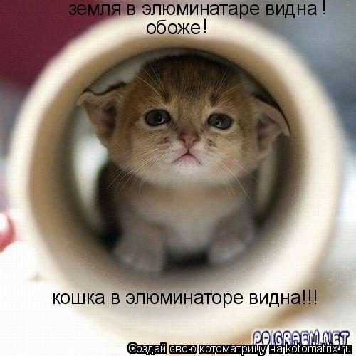 Котоматрица: земля в элюминатаре видна обоже ! ! кошка в элюминаторе видна!!!