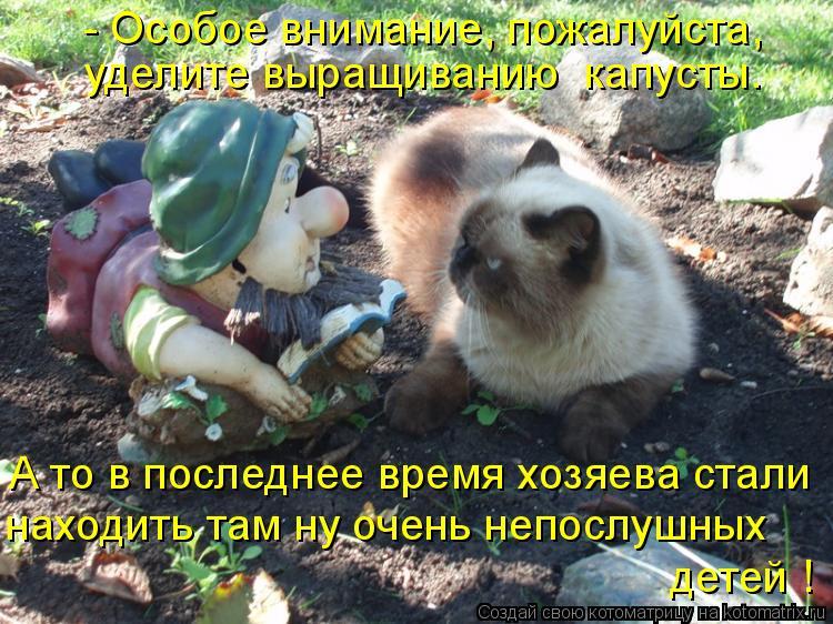 Котоматрица: - Особое внимание, пожалуйста,  уделите выращиванию  капусты. А то в последнее время хозяева стали находить там ну очень непослушных  детей !